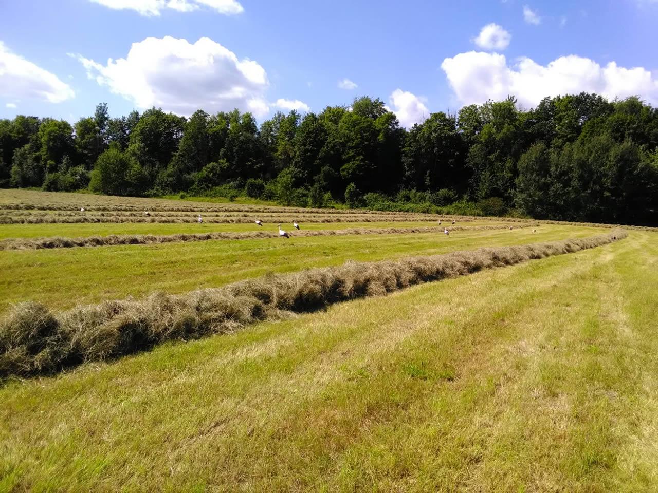 Pferdeheu von Barhufpflege Nordhessen